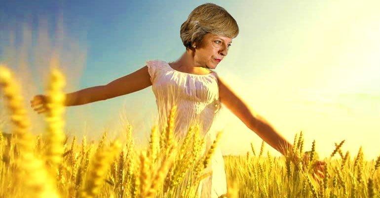 wheat_gal