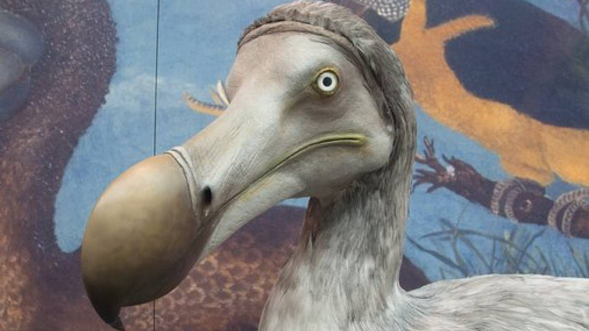 Extinct bird discovered to have been shot in the head
