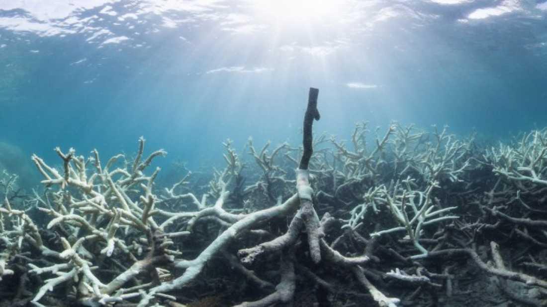 Barrier Reef pollution