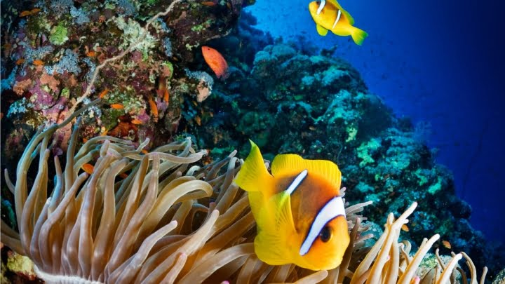 The Great Barrier Reef: a bright underwater scene featuring underwater plants and brightly coloured fish.