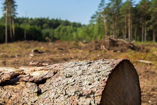 deforestation-the-truth-land
