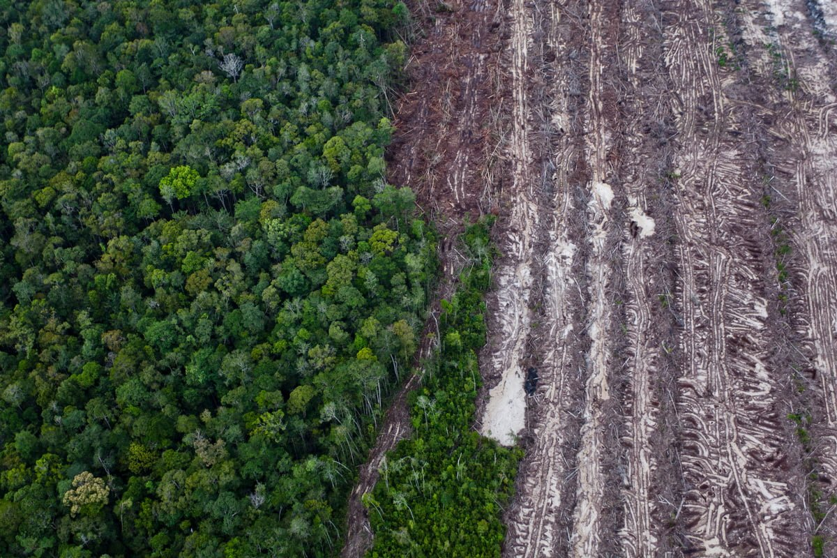 deforestation-the-truth