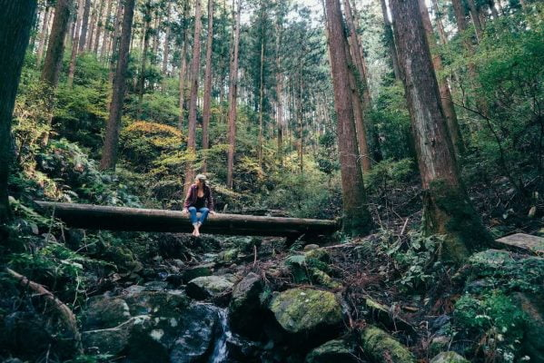 forest-bathing-the-japanese-stress-combatant