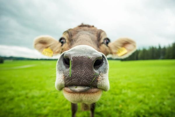 how-your-lifestyle-is-causing-the-amazon-to-burn-animal-agriculture
