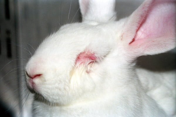 is-animal-testing-the-only-option-rabbit