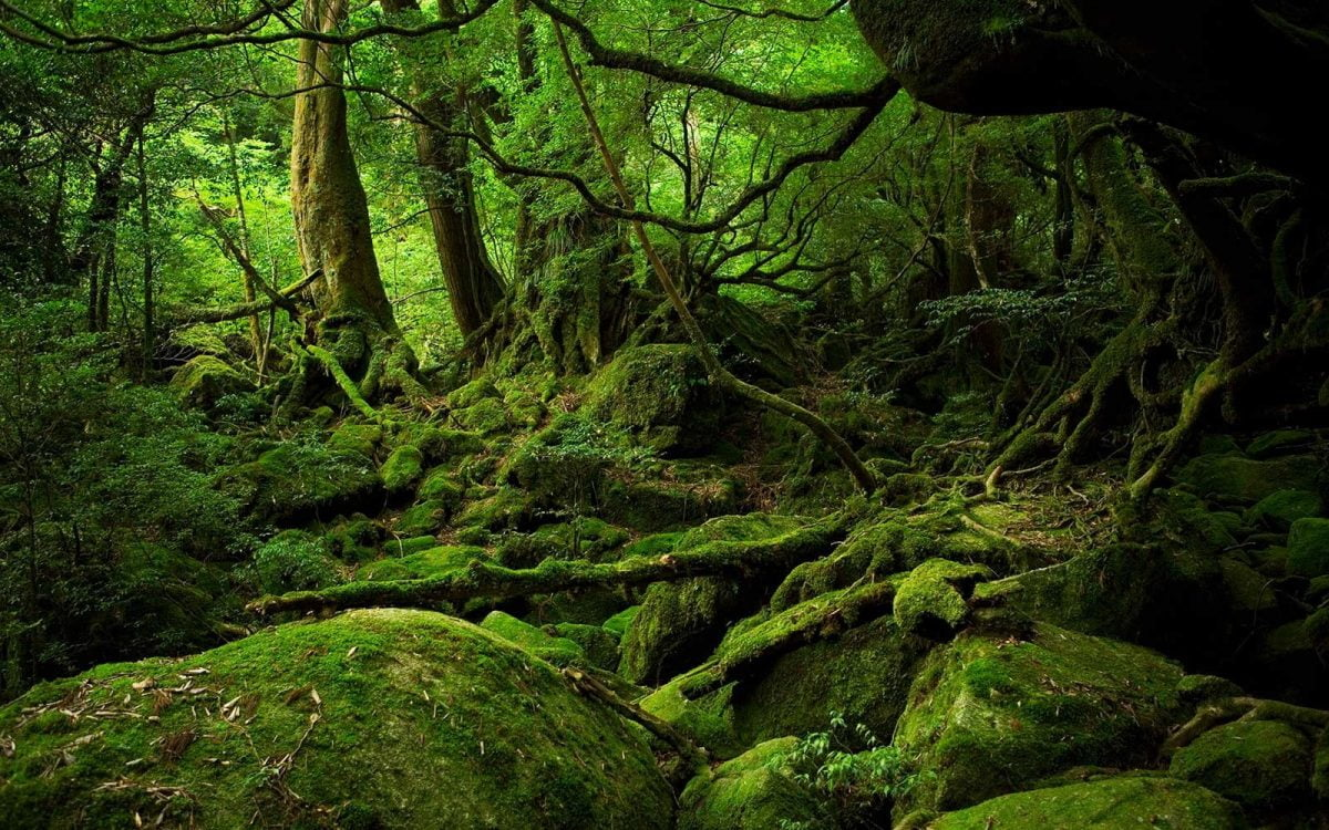 forest-bathing-the-japanese-stress-combatant-japan