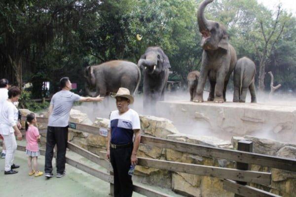 zimbabwe-droughts-raise-elephant-sales-china.jpg