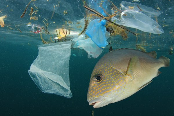 capitalism-and-the-climate-plastic
