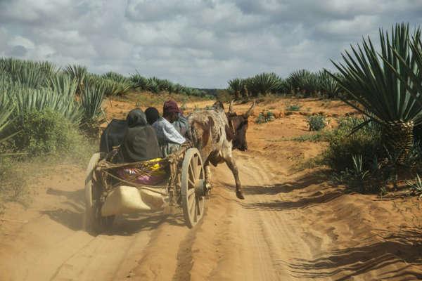 madagascar-famine-village